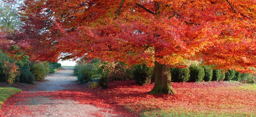 autumn_tree_red_leaves